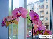 Комната 17.1 м² в 5-ком. кв., 2/5 эт. Воронеж